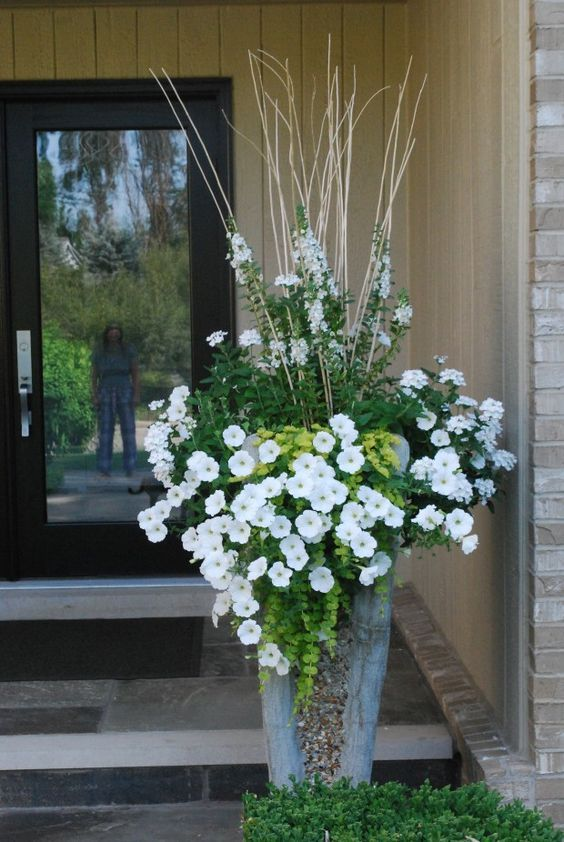 Beautiful Container Setting Trailing White Verbena And