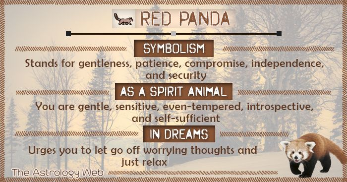 What Does A Red Panda Symbolize Red Panda Is The Symbol Of