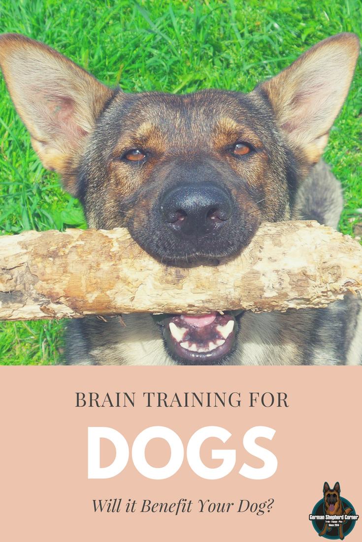 Brain Training For Dogs Review Will It Benefit Your Dog Dog Training Dog Training Near Me Puppy Training