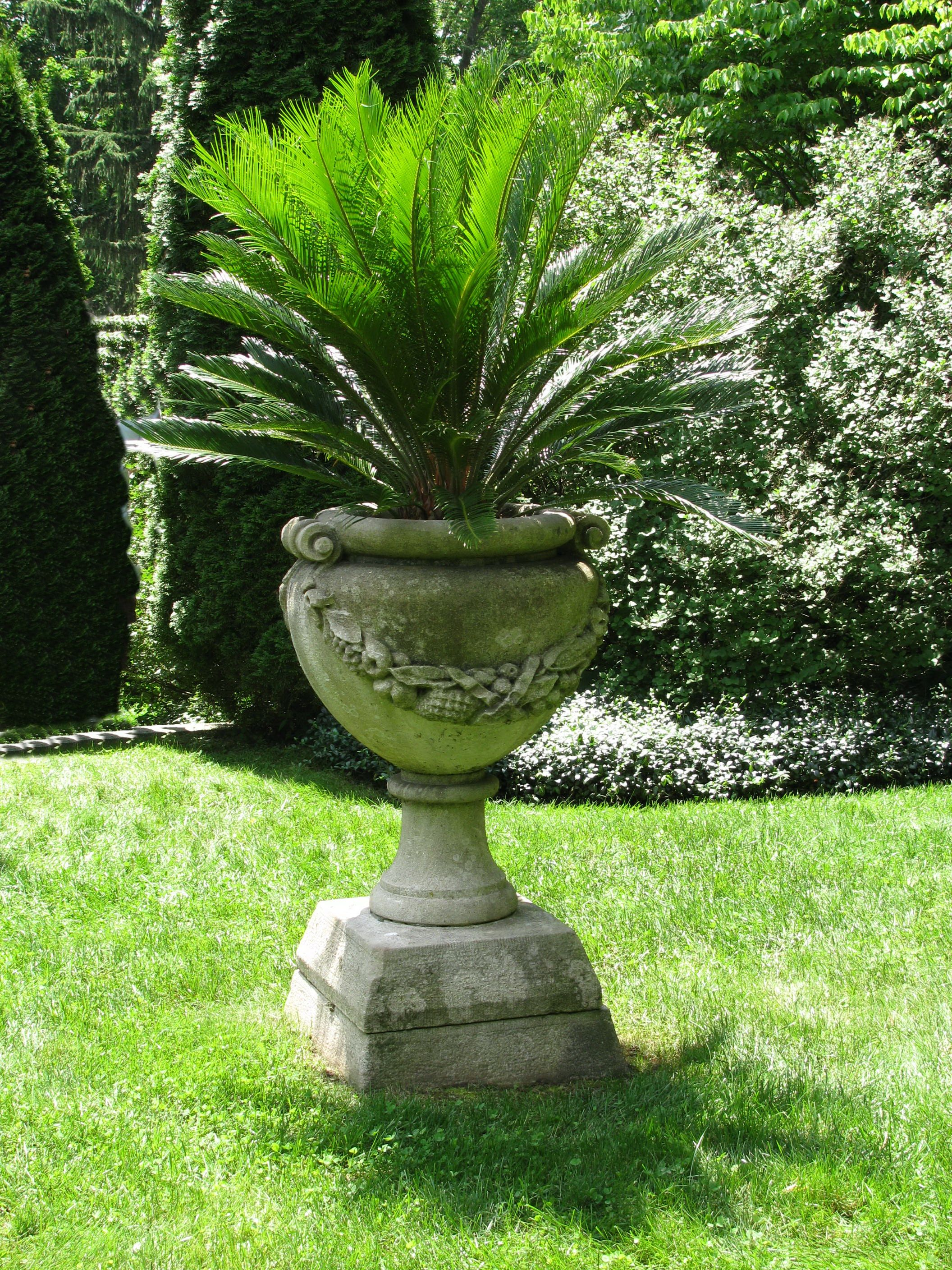 Great urn with cycad