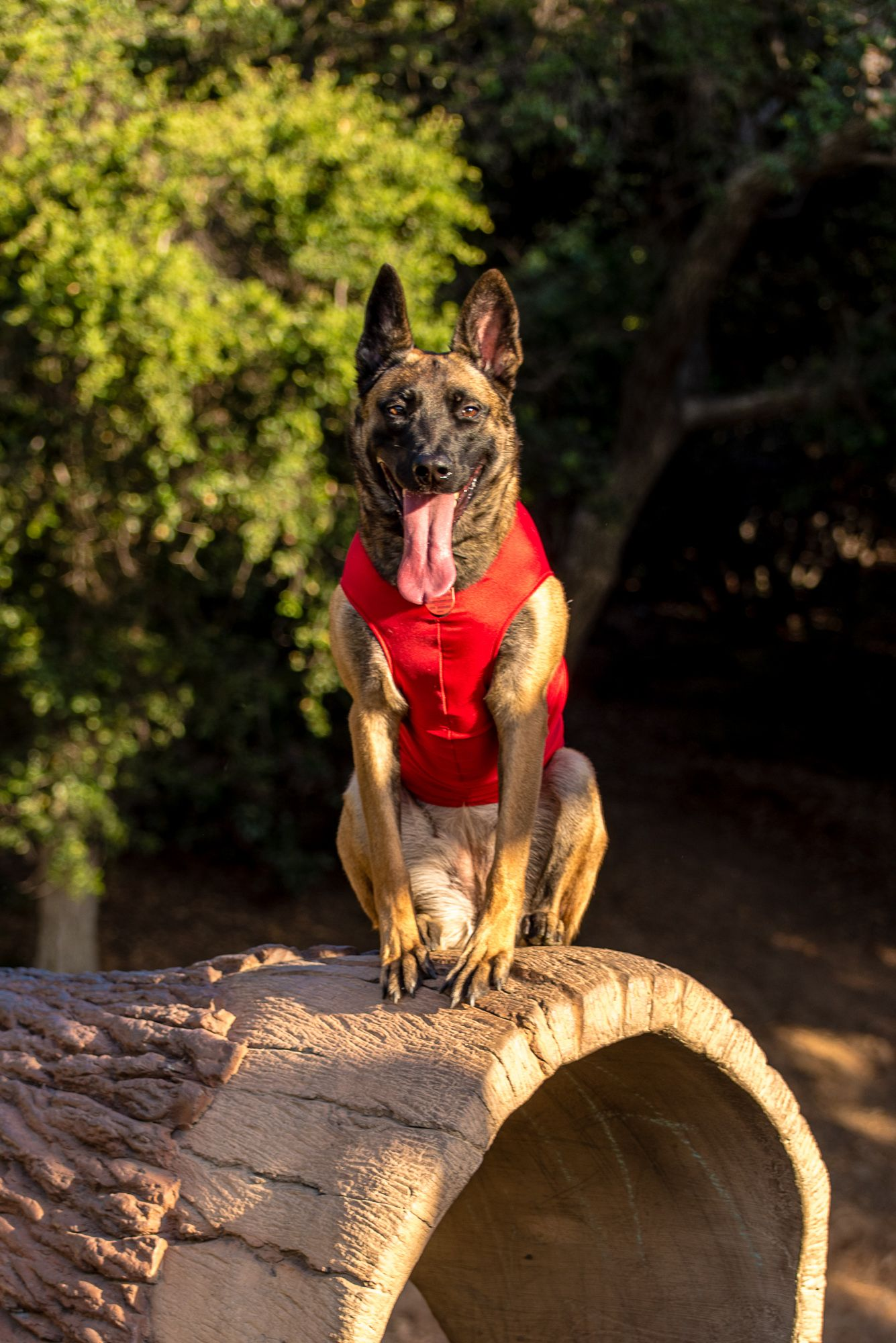 That Is One Long Tongue Sit Means Sit Dog Training So Cal