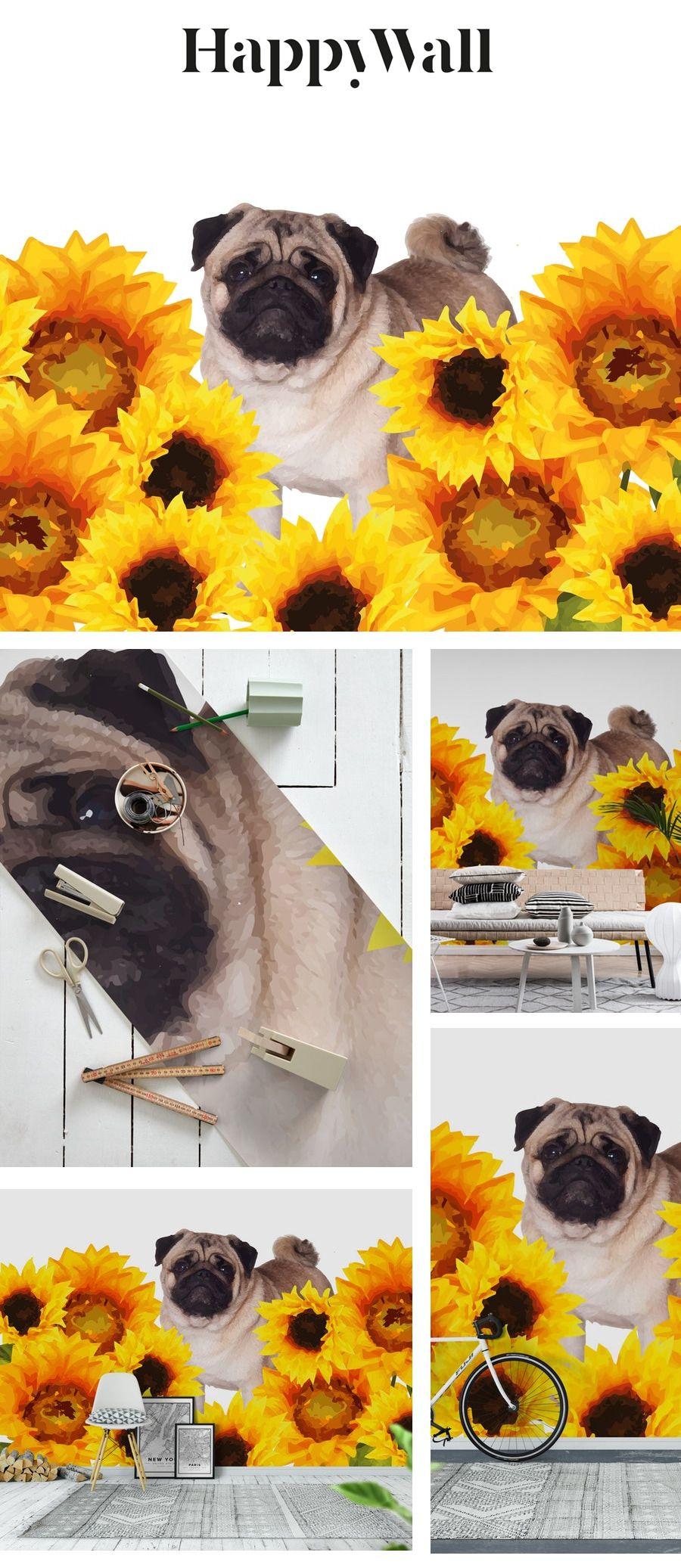 Pug sunflower field Wall mural Field wallpaper