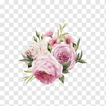 Pink Flowers Rose Color Hd Hand Painted Watercolor Roses Pink And White Roses Free Png Purple Flowers Wallpaper Pink Floral Painting Flower Illustration