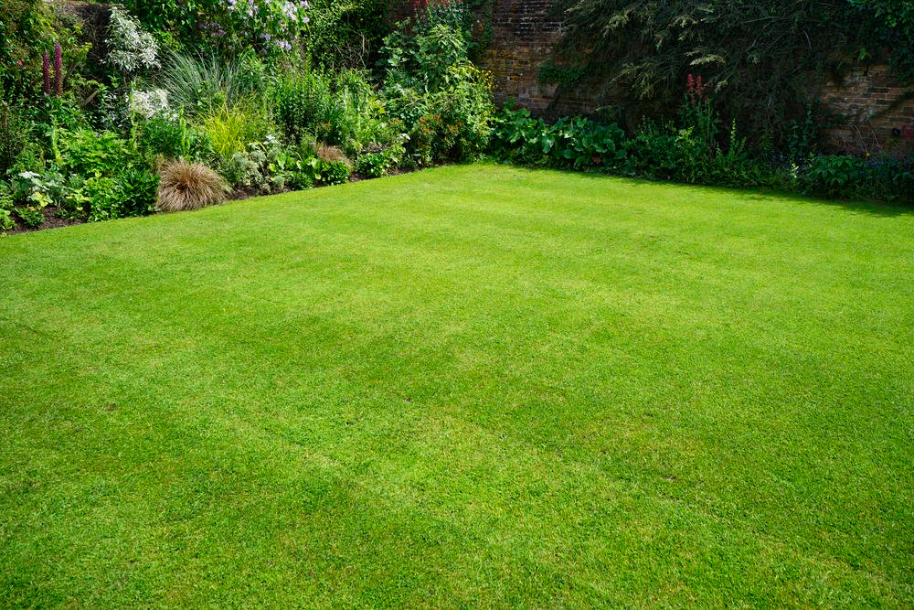 Rasen Neu Anlegen So Funktioniert S Rasen Anlegen Rasenprobleme Garten Umgraben