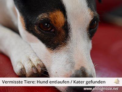 STREUNERHerzen e.V. Hunde, Tiere und Tierheim