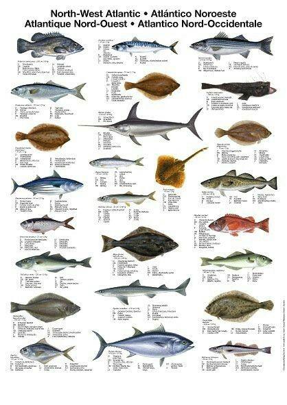 The Surfing Handbook Sea Fish Marine Fish Types Of Fish