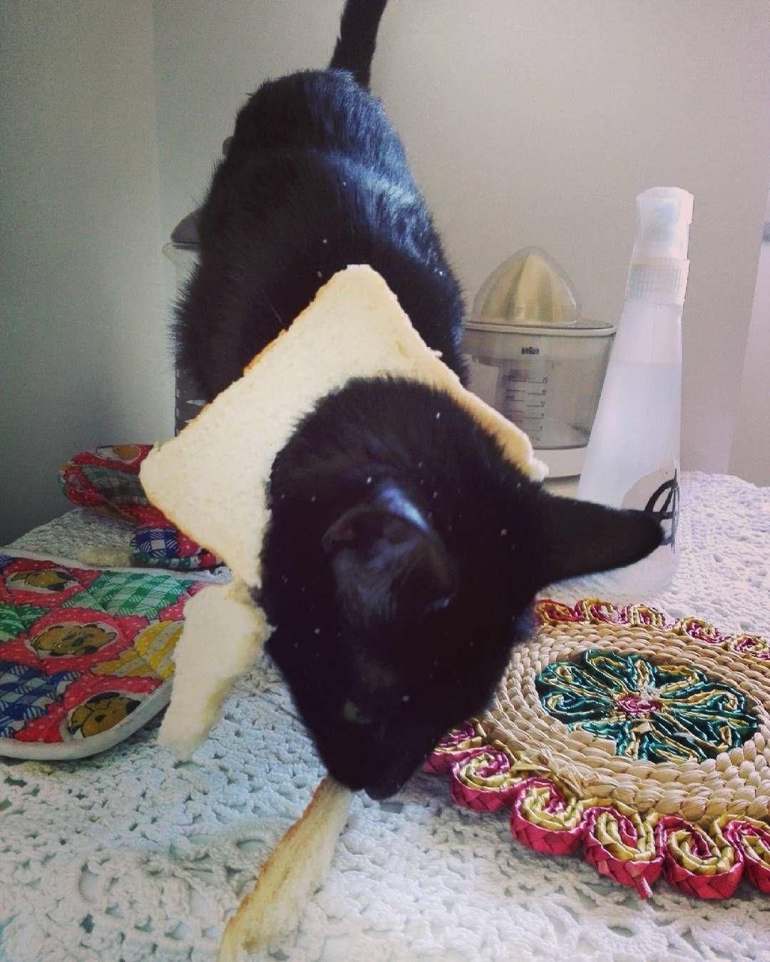 Estoy siguiendo la dieta de alf gato en pan lactal.