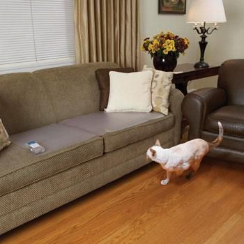 5 Tips To Keep Cats Off The Furniture Pet Training Indoor Pets