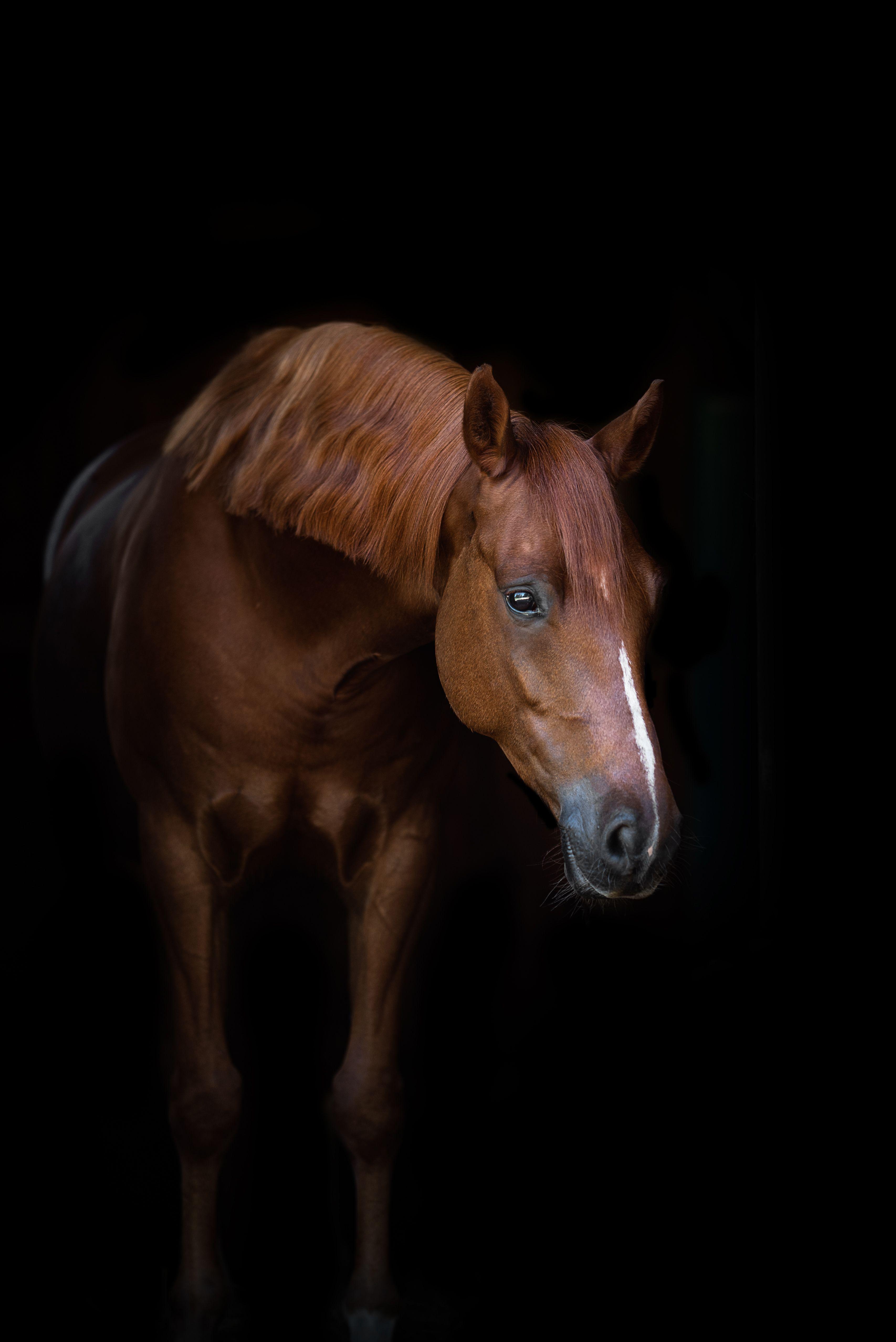 Pin Auf Pferde Fotografie