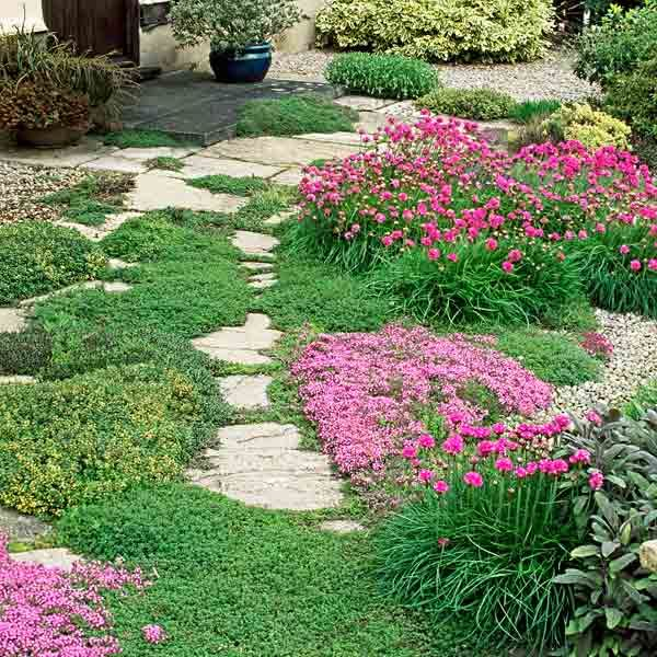 All About Groundcover