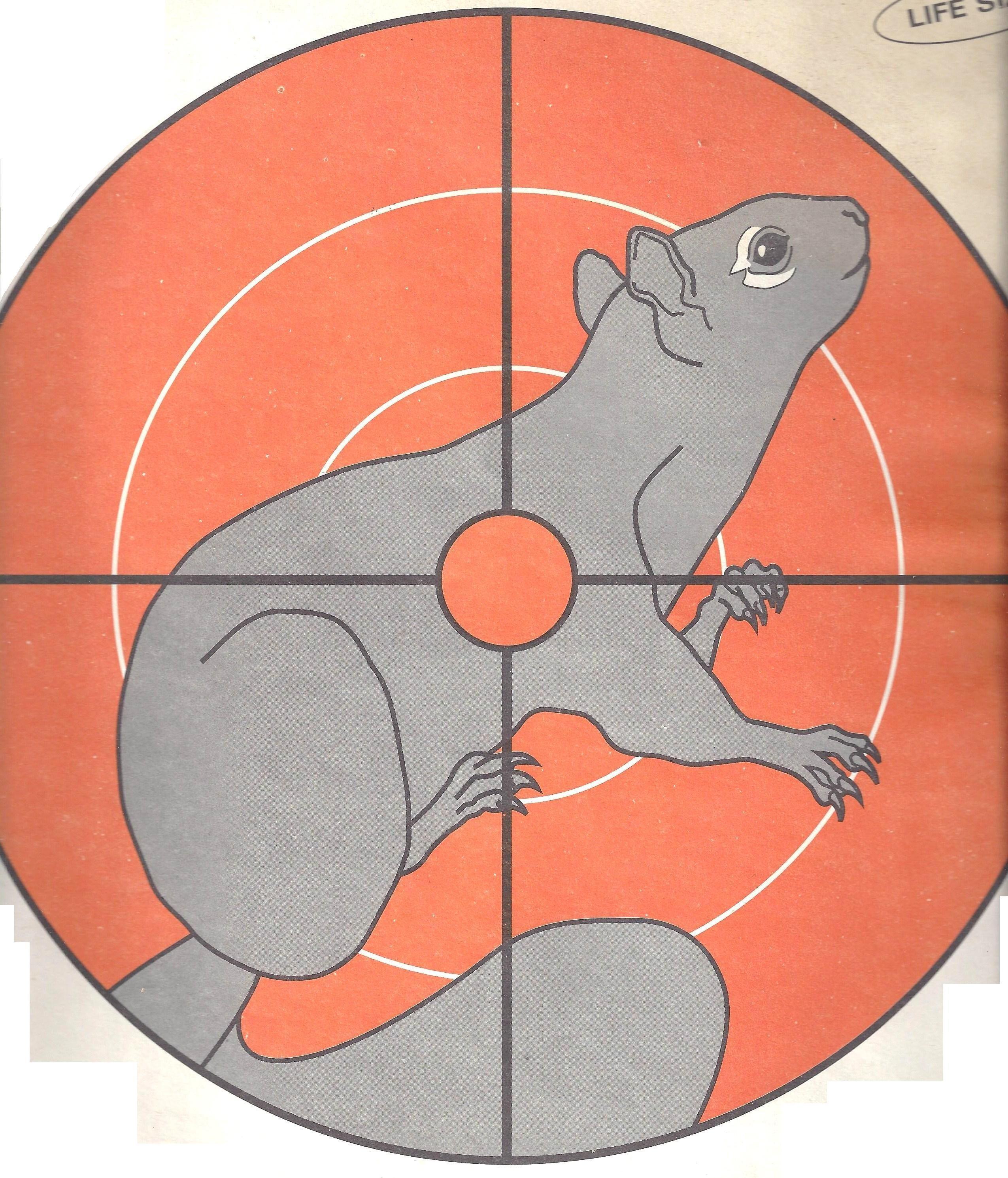 Squirrel Target