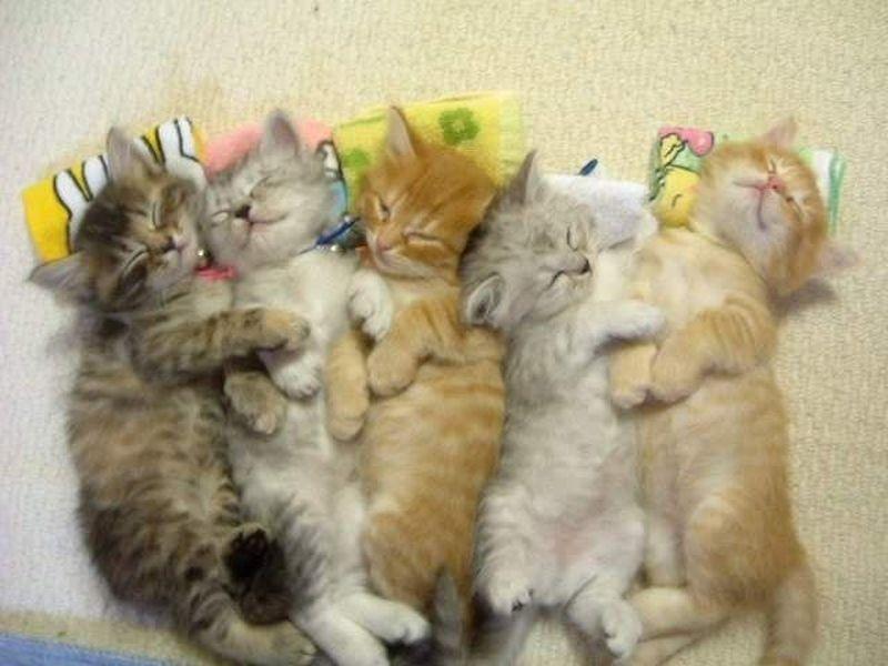 Katzenbabys Im Traumland Wer Traumt Am Schonsten Katzenbabys Katzen Susse Tiere