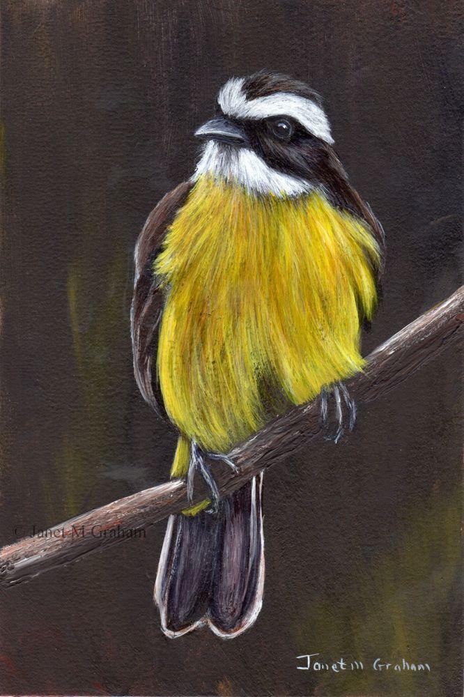 Lesser Kiskadee Original Bird Wildlife Acrylic Painting Realistic Art Realism