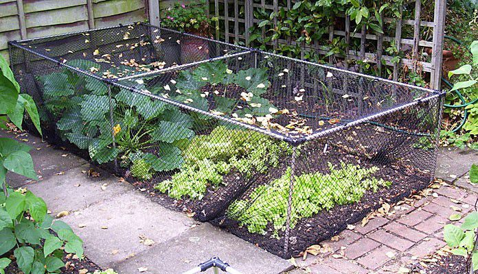 Build Your Own Vegetable Cage, Mr And Mrs Emms   London