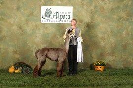 Morning Beckons Farm Alpaca Alpaca Animals Horses