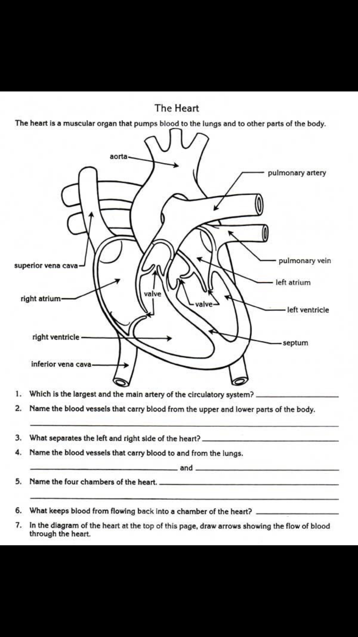 Pin By Kaitlyn Brotherton On Medical Worksheets