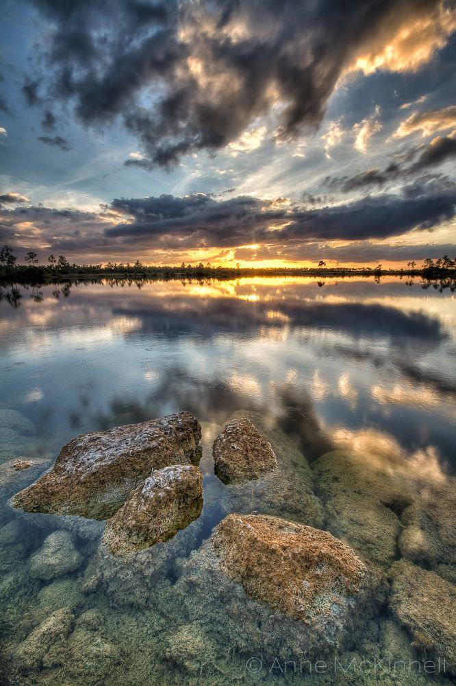 Pine Glades Lake, Everglades National Park, Florida by Anne McKinnell