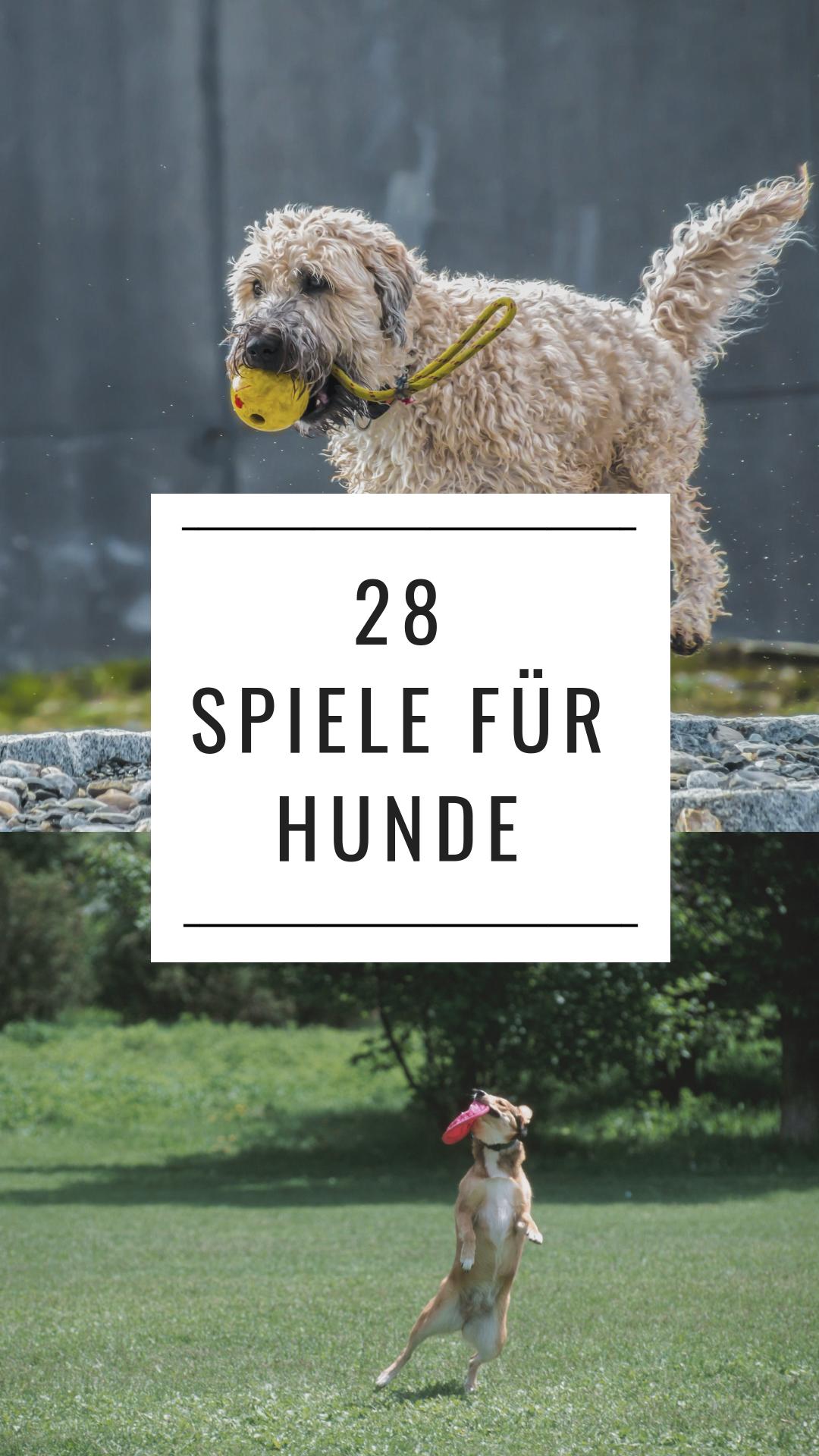 Photo of 28 juegos para perros: las mejores ideas de expertos en perros