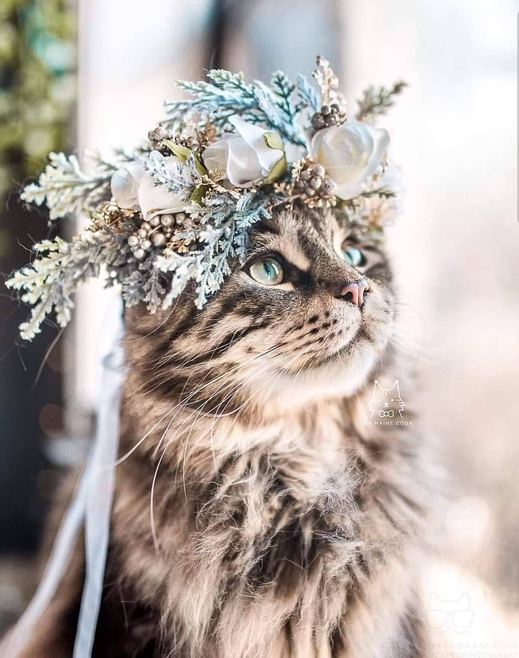 Lady Gray Dreams Beautiful Cats Cute Cats And Kittens Funny