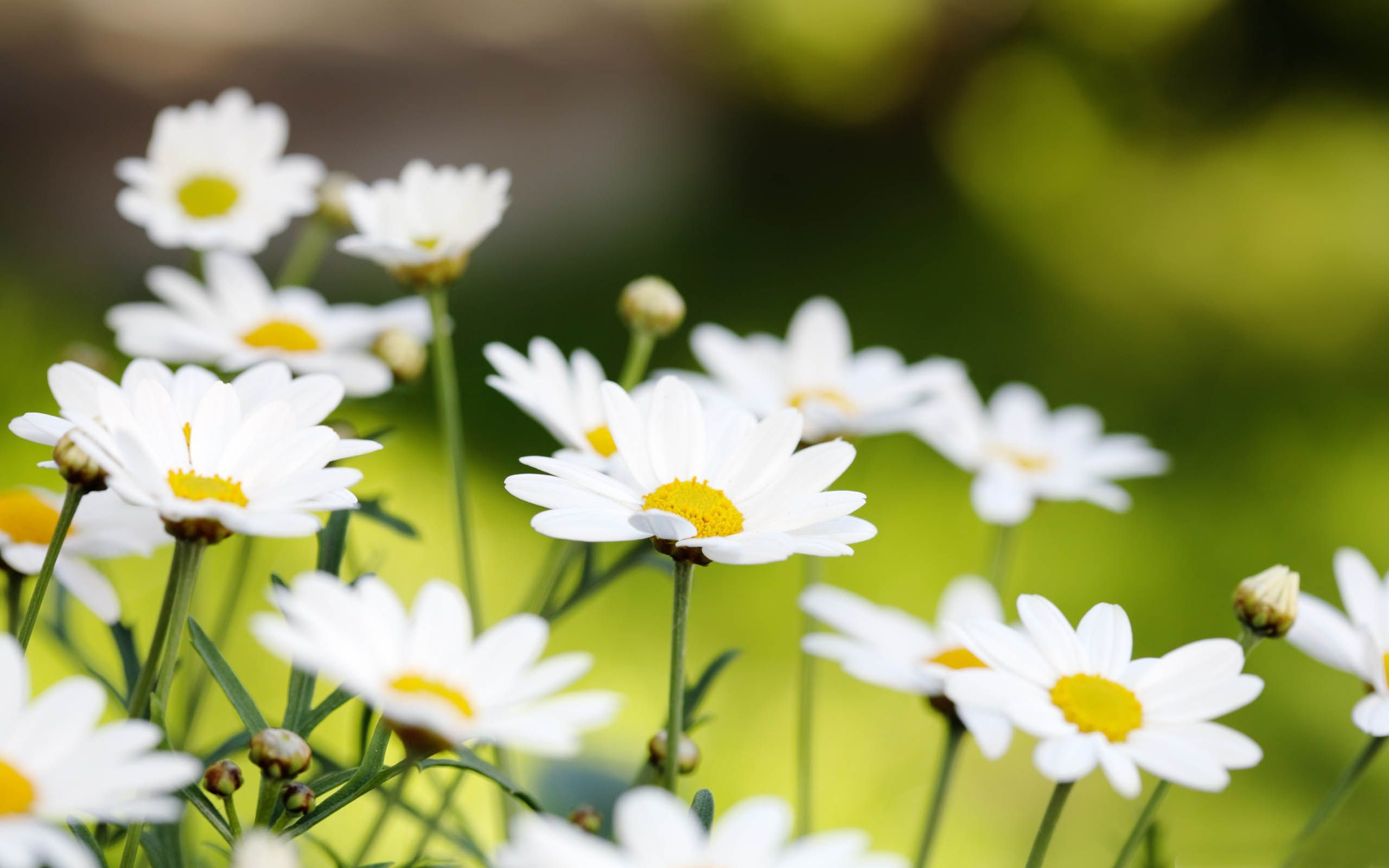 Most Beautiful Summer Flowers In Season Flower Meanings