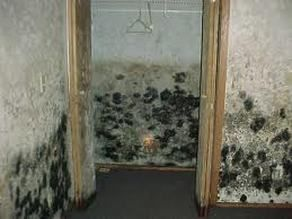 Black Mold In House Find Out How A Uv Light Can Kill And Bacteria Your Home Www Greenboxair