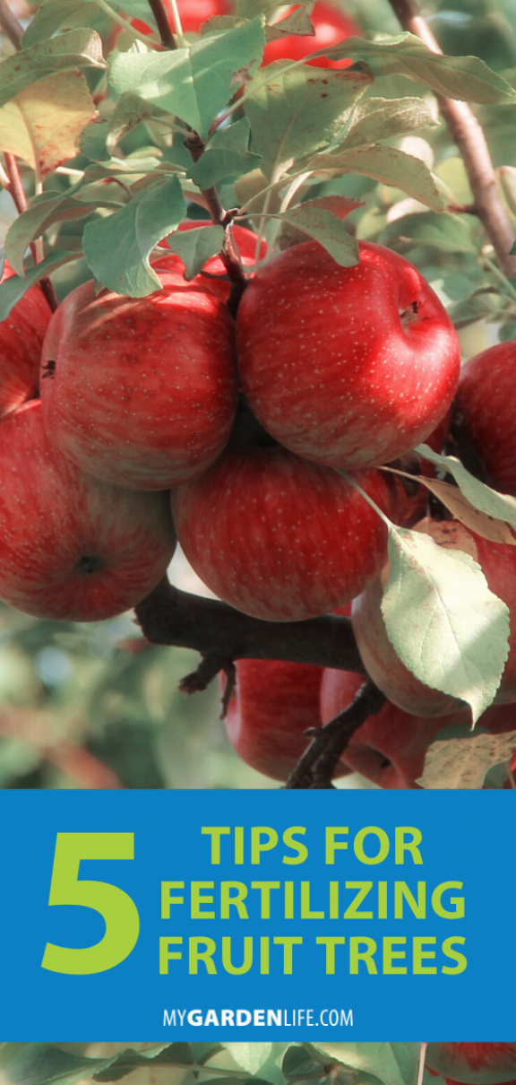 Juicy Peaches Crisp Apples And Plump Plums In Your Garden If You Feed Your Fruit Trees With The Right Fert Fertilizing Fruit Trees Growing Fruit Fruit Trees