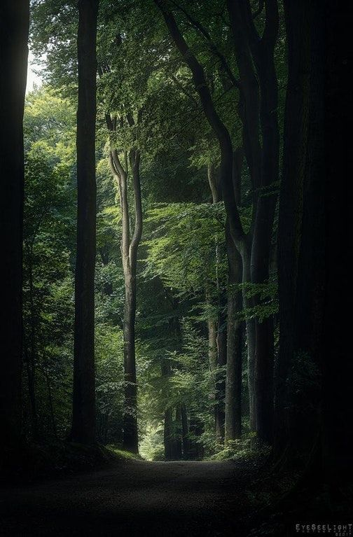 Reddit The Front Page Of The Internet Nature Beautiful Forest Nature Aesthetic