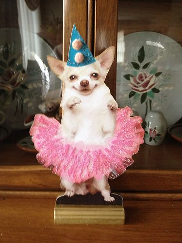 Electronics Cars Fashion Collectibles Coupons And More Ebay Beautiful Baby Girl Chihuahua Ebay