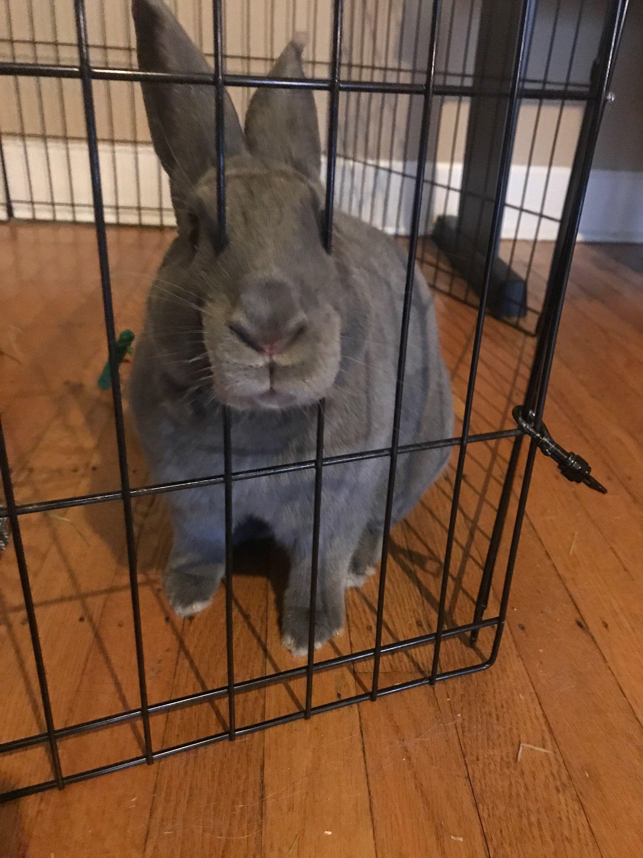 Rabbit Toys Treats Free Shipping 20 Off Today Rabbit Bunny Bunnies Rabbithouses Bunnylove With Images Rabbit Adoption Rabbit Treats Rabbit Breeds