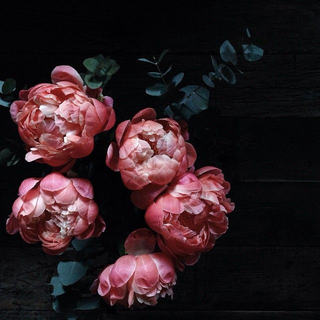 Gorgeous rich pink peonies.