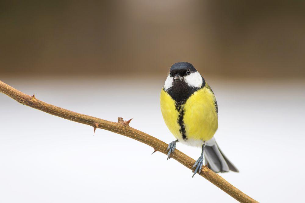 طائر الحداد او القرقف كل ماتود معرفته حول هذا الطائر طيور العرب Animals Birds Bird