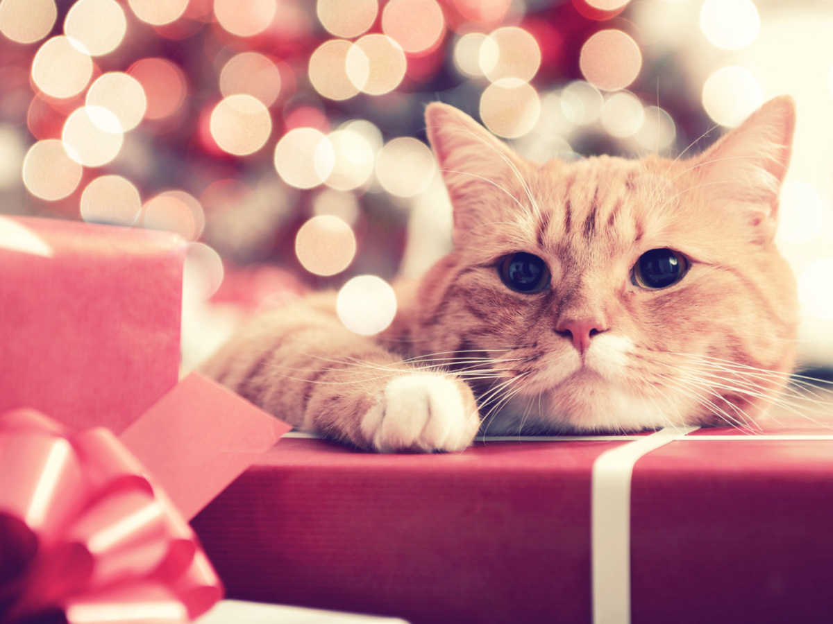 Trader Joe's Is Releasing an Advent Calendar for Your Cat
