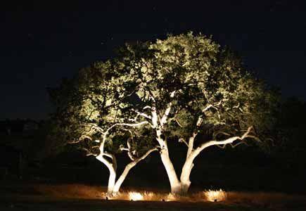 outdoor tree lighting outdoor trees