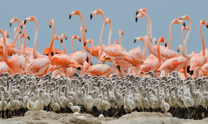 Before they're pink... This is beautiful!    National Geographic Photo of the Month