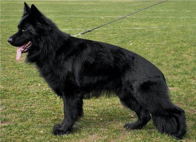 Pin By Mollar On Doggy Black German Shepherd German Shepherd