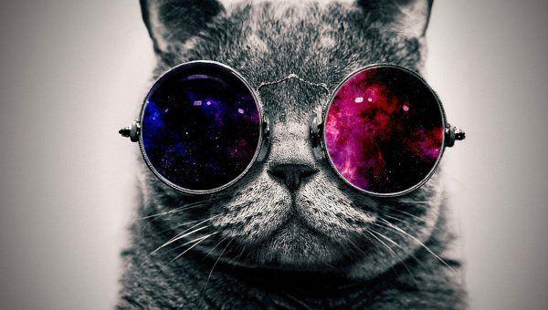 خلفيات صور روعة و جديدة كما أن صور خلفيات التالية بجودة عالية و يمكن تحميلها ومشاركتها مجانا Hipster Cat Cat Glasses Galaxy Cat