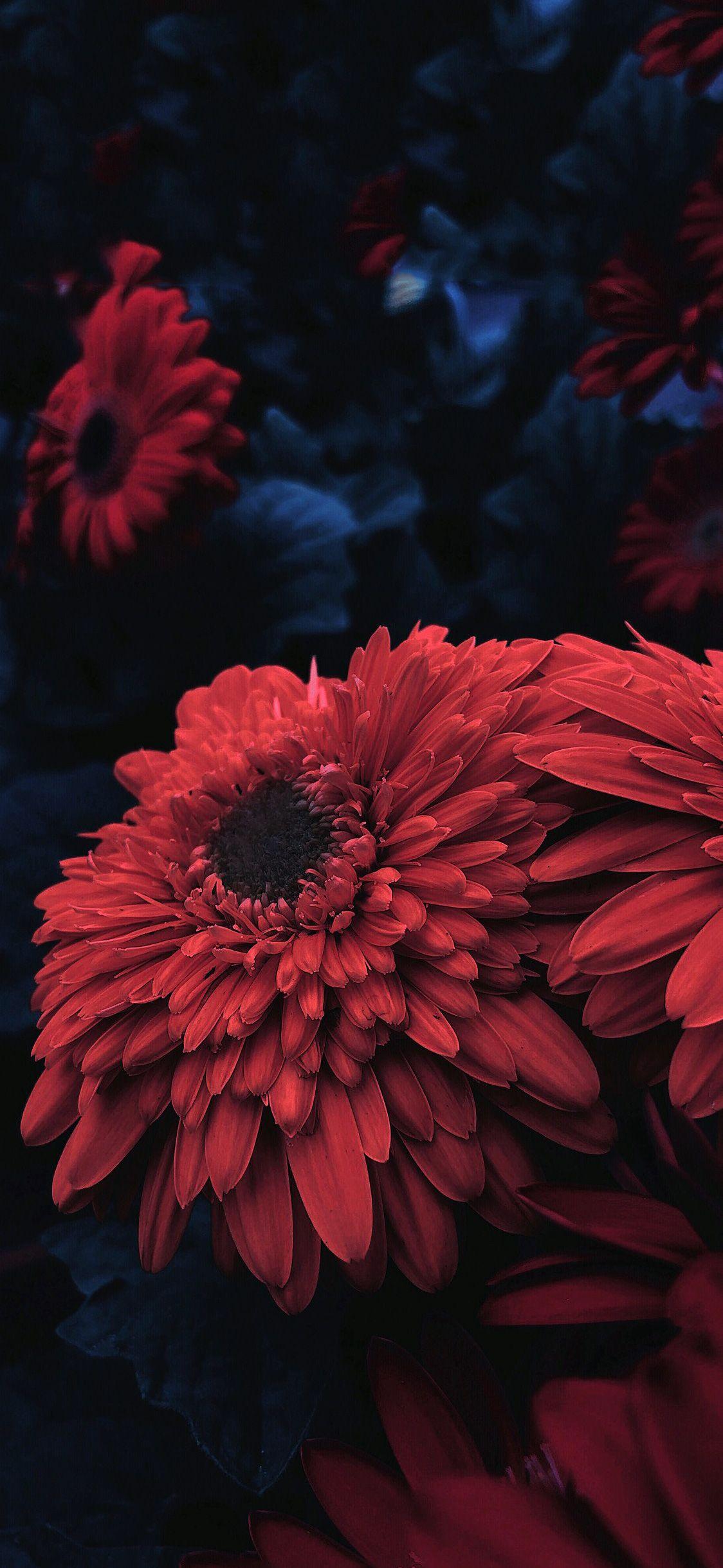 Red Flower For Iphone X Ioswall Blumen Wallpaper 3d Hintergrund Rote Blumen