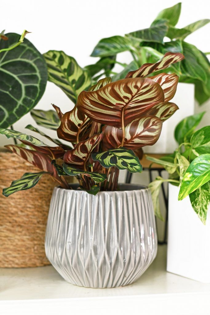 20 Air Purifying Houseplants Safe for Dogs + Cats Sarah