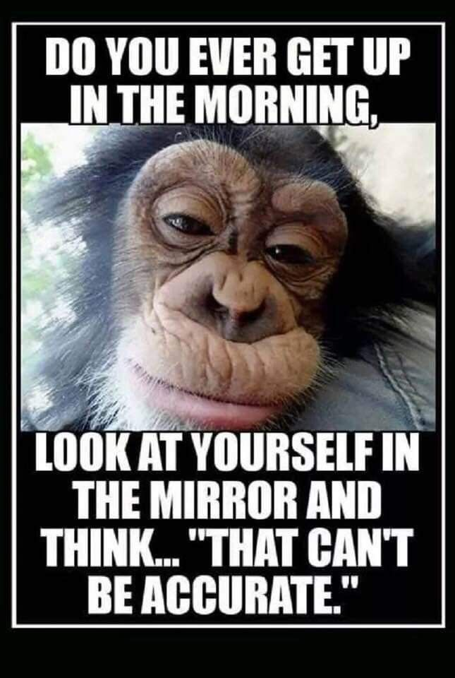 Pin By Belinda Walter On Lmbo Morning Quotes Funny Funny Good Morning Quotes Funny Quotes