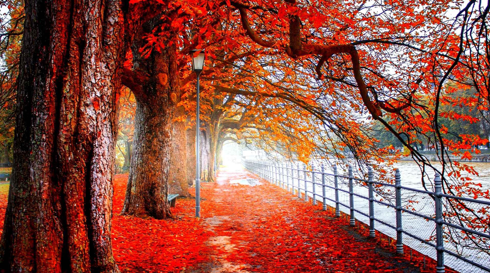 Red Tree 4k Wallpapers Anime Download HD Wallpaper 4 US