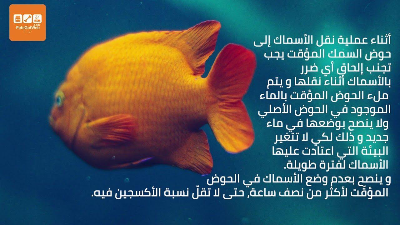 بيتس جوت ويب يقدم لكم كيفية تنظيف حوض السمك Petsgotweb Make It Yourself Fish Pet Lol