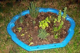 Kiddie Pool Garden...maybe Pizza Garden?