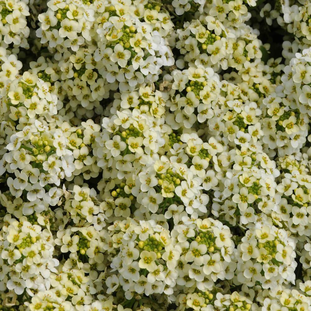 """Neu Bewässerung Garten 3//4/"""" Set 4-teiliges Sprüh- Set Wasser Lime Line"""