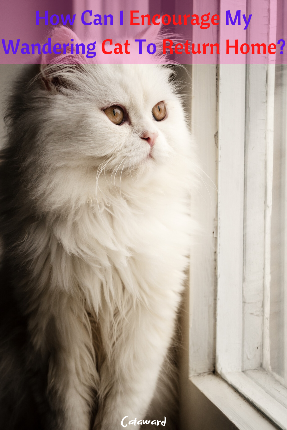 How to find a lost cat or enoucrage it to return home? Do