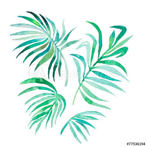 Watercolor Palm Leaves Isolated On White Vector For Your Design
