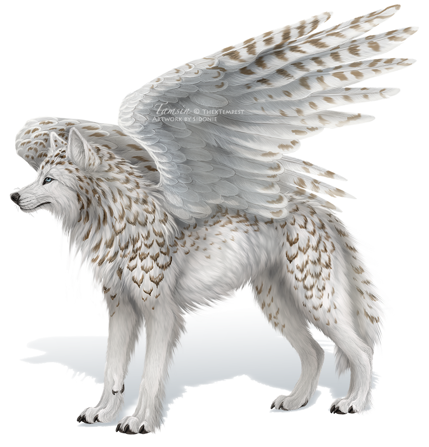 Photo of 11+ Anime Wolf With Wings Awesome