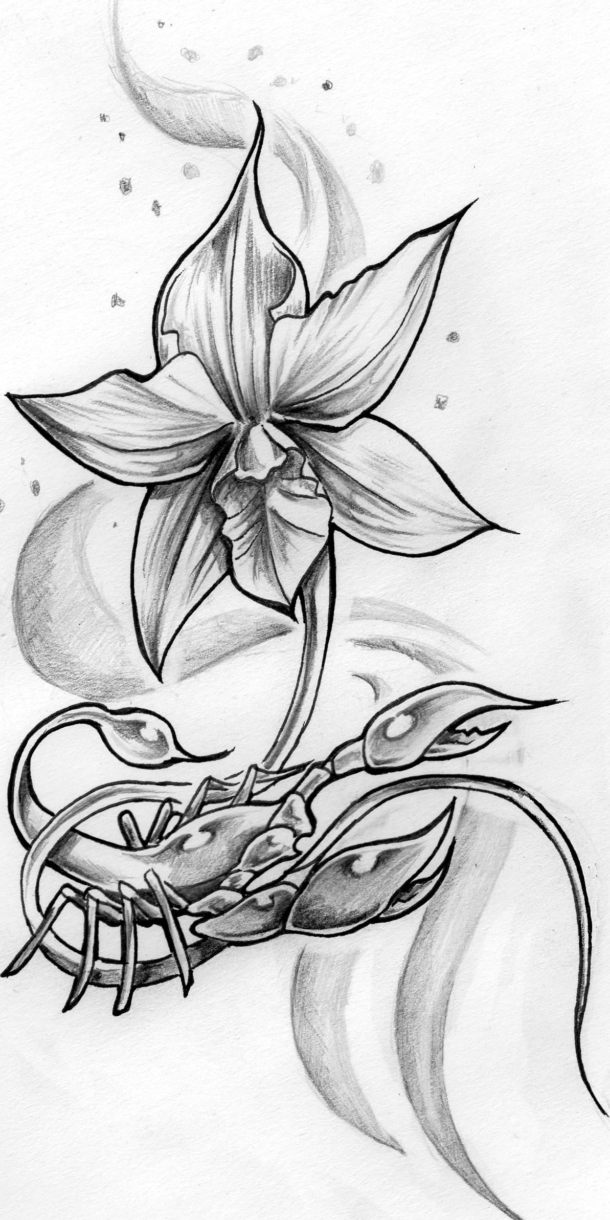 Modeles Tattoo Orchidee Tatouages Orchide Rose Tattoo Scorpion