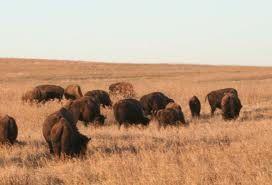 ACCOMPLISHED: Tall Grass Prairie preserve - Pawhuska, Osage County, Oklahoma