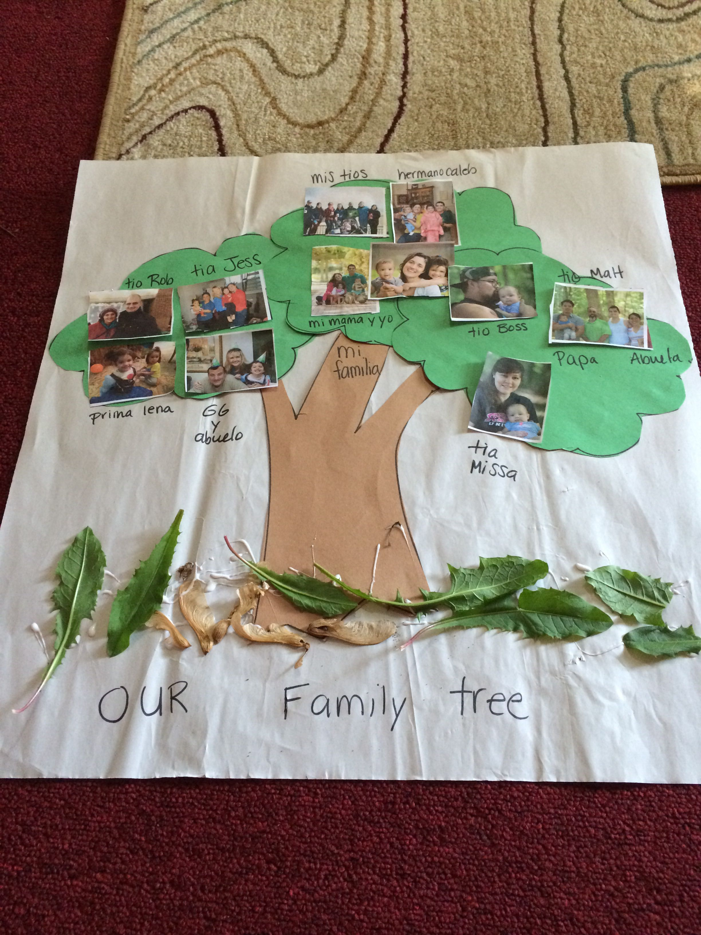 Family Tree Preschool Kindergarten Social Stu S