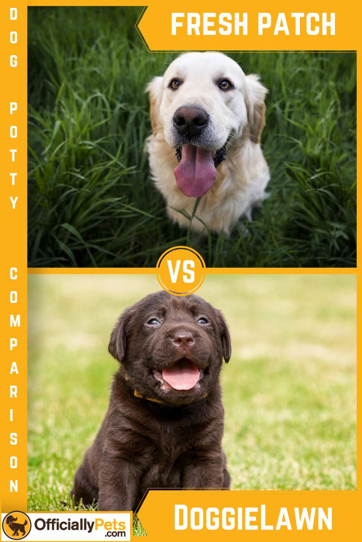 Fresh patch vs doggielawn reddit